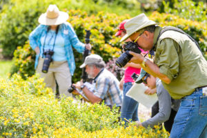 Participants take photos of bees during a bumble bee monitoring workshop at the University of Wisconsin-Madison Arboretum on July 6, 2017. The workshop provided instruction on how to photographically document bumble bees for survey and monitoring use. (Photo by Bryce Richter / UW-Madison)